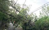 WATCH: Gusts reach 87km/h as Storm Ali sweeps across Limerick