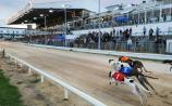 Limerick quest in Race of Champions final in Kingdom Greyhound Stadium
