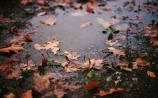 Settled autumnal weather in store for the week