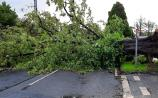 Trees fall 'like a house of cards' across County Limerick