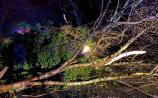 Lucky escape for Limerick motorist as tree falls on car during Storm Bella