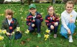 Limerick urged to show support on Daffodil Day