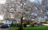 Gardening: National Tree Week is really growing