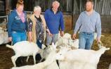 Limerick farm family embarks on new cheesy venture