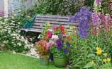Green Fingers: Time to 'Bloom' for a busy June
