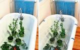 Green Fingers: Watering plants while you are away