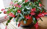 Green Fingers: Make it a green Christmas this year