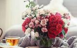 Green Fingers: 'Roses are red violets are blue'