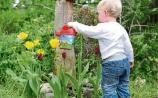 Keeping little Limerick gardeners busy as bees