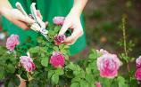 Green Fingers: 'Never get tired of summer beddings'