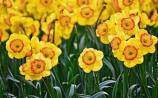 Green Fingers: Is it too early to plant spring flowering bulbs? - James Vaughan