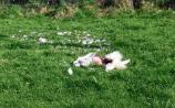 Gun shells found next to dead swans beside lake at O'Briens Bridge
