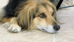 Collie 'poisoned' during walk along canal bank on Limerick-Clare border
