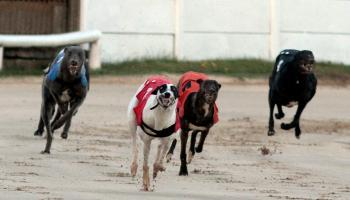 Talking Dogs features Con and Anne Kirby quarter-finals