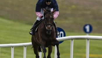 Hot streak continues on track for Limerick racing connections