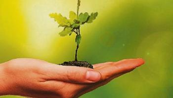 Then & Now: Why not plant a tree this week?