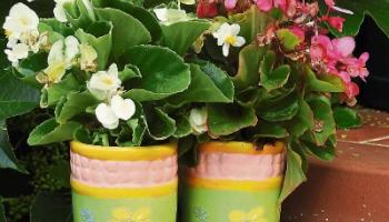 Green Fingers: Getting ready for a blooming good summer
