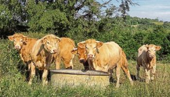 Limerick farmers on 'redalert' over water supplies