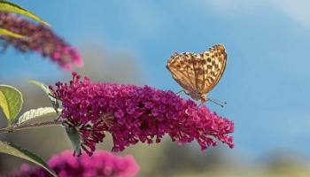 Green Fingers: Plants that will attract butterflies