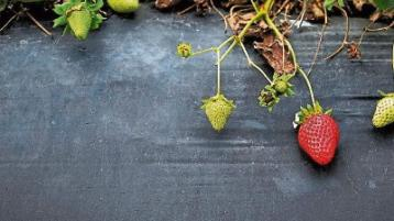 Green Fingers: Gardening time is hitting its stride