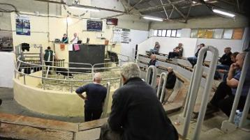 Limerick farmers 'back in the ring' as restrictions ease