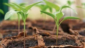 Green Fingers: It's feeding time for little plants