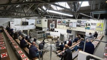 Limerick Farming: Cattle prices at Kilmallock Mart 'at an all time high'