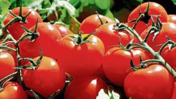 All About Food: Too many tomatoes?
