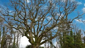 Wild About Wildlife: The secrets of the Oak Woods