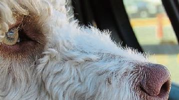 Have pooch, will travel: how to keep your pets safe in the car