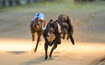 Irish Greyhound Board announces new confidential phone line to report welfare concerns