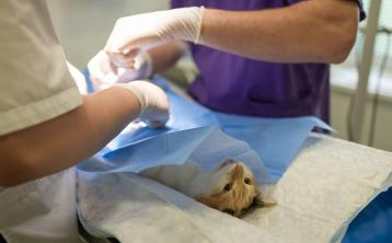 'Positive sign' as 133 new vets register with Veterinary Council of Ireland