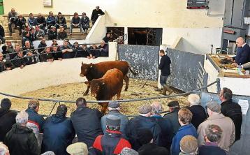 Livestock marts across Ireland welcome buyers back ringside