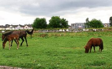 Sinn Féin councillor Seighin Ó Ceallaigh has called for action on horse welfare in Limerick