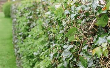Green Fingers: The history and benefit of hedgerows