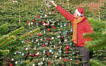 Green Fingers: Picking the perfect Christmas tree