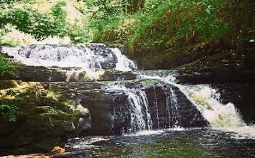 Wild About Wildlife: Exploring the Clare Glens - Albert Nolan