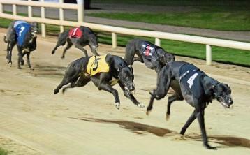 2020 National Greyhound Racing Awards set for Sunday night