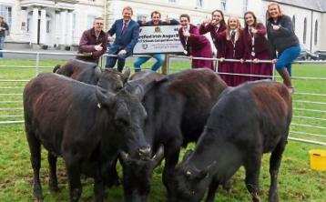 A big year on the farm for students at Limerick school