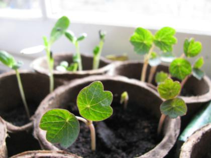 Sowing the seeds of a succesful garden - Limerick Leader