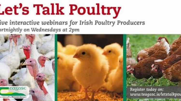 'Let's Talk Poultry' – Teagasc launch webinar series to tackle poultry industry issues