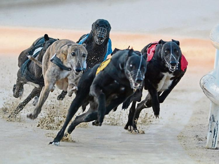 No Limerick success in final of English Greyhound Derby